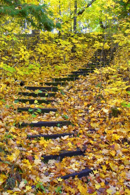 Fall forest steps